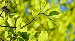 Bairros com mais árvores têm imóveis mais caros, afirma estudo